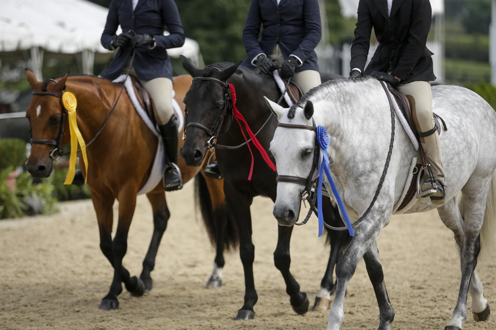 2019 USEF Pony Finals presented by Collecting Gaits Farm Ready to