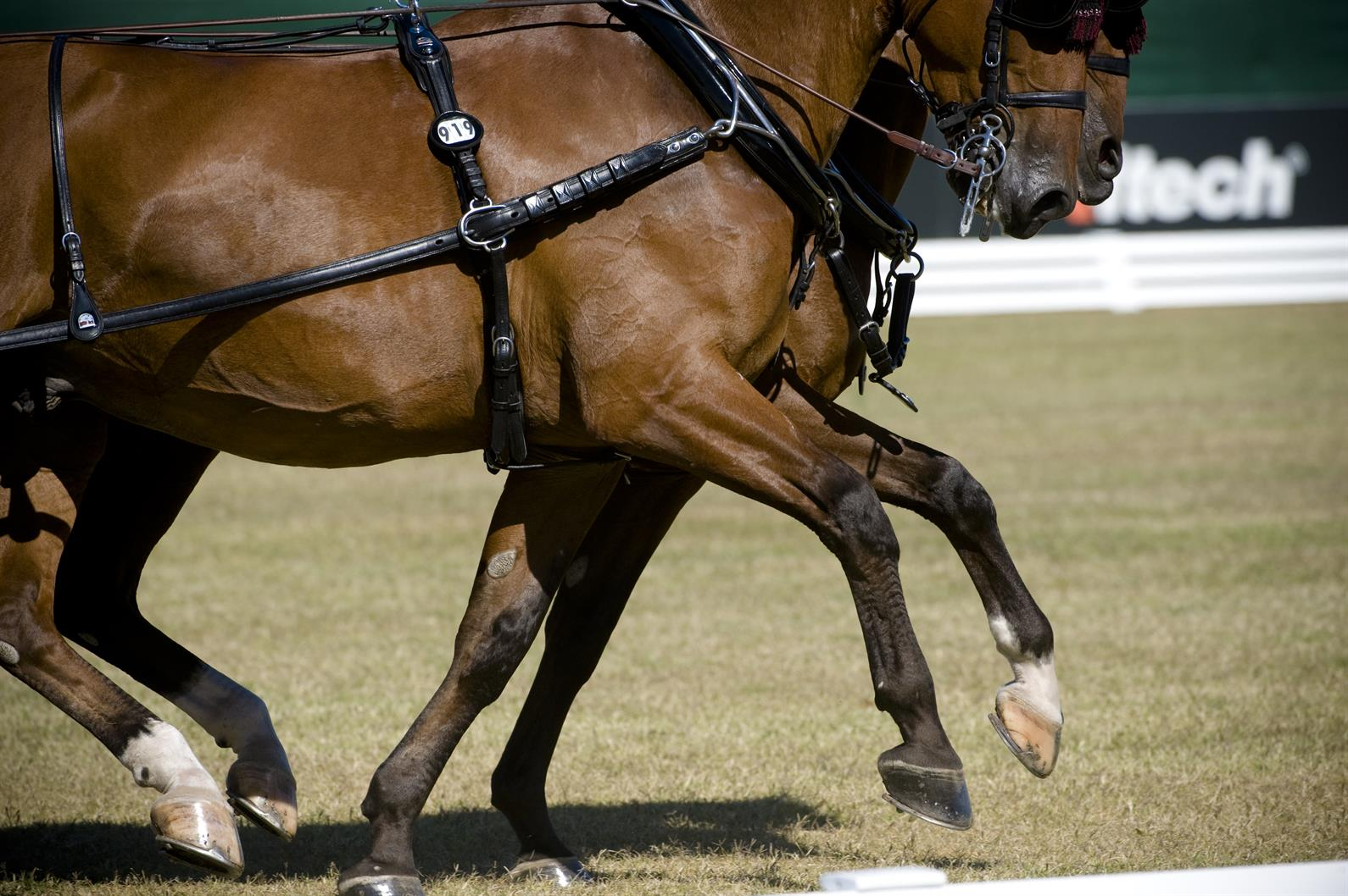 Image result for What Do You Need To Know About Horse Joint Health?