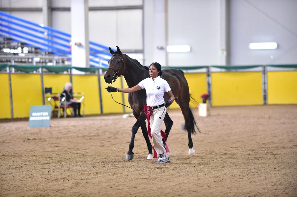 Arabian Horses Head to Illinois for 2019 Sport Horse