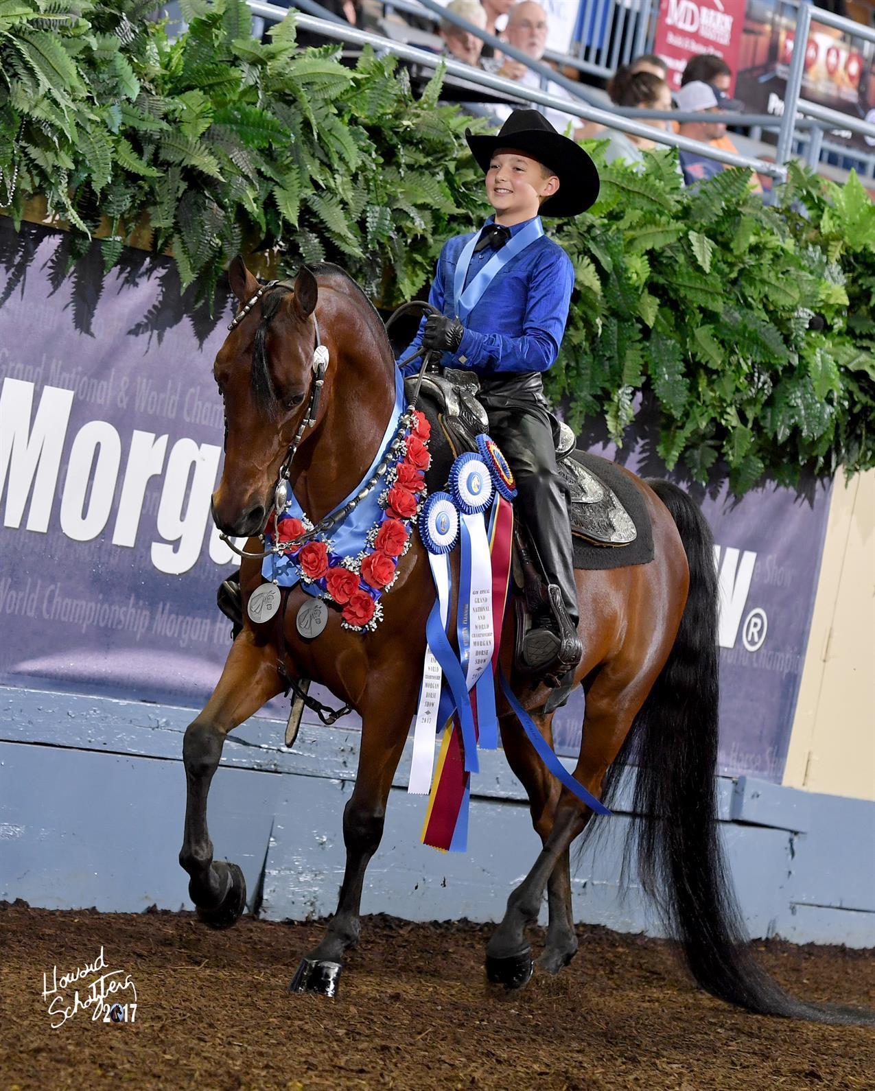Morgan Horse Breed Celebrated In Oklahoma City Us Equestrian
