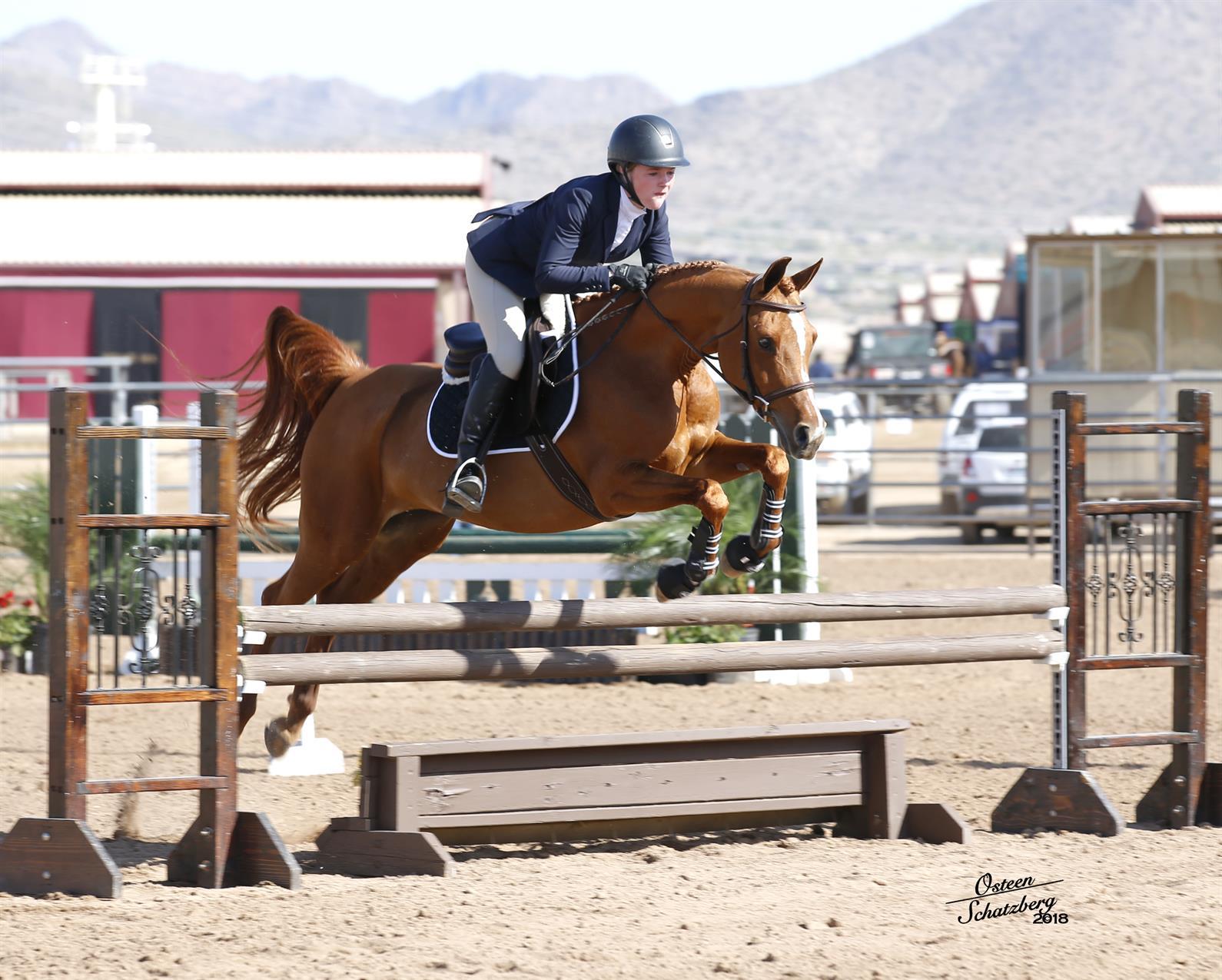 Scottsdale Arabian Horse Show Set To Showcase History And Diversity Of Arabian And Half Arabian Horses Us Equestrian
