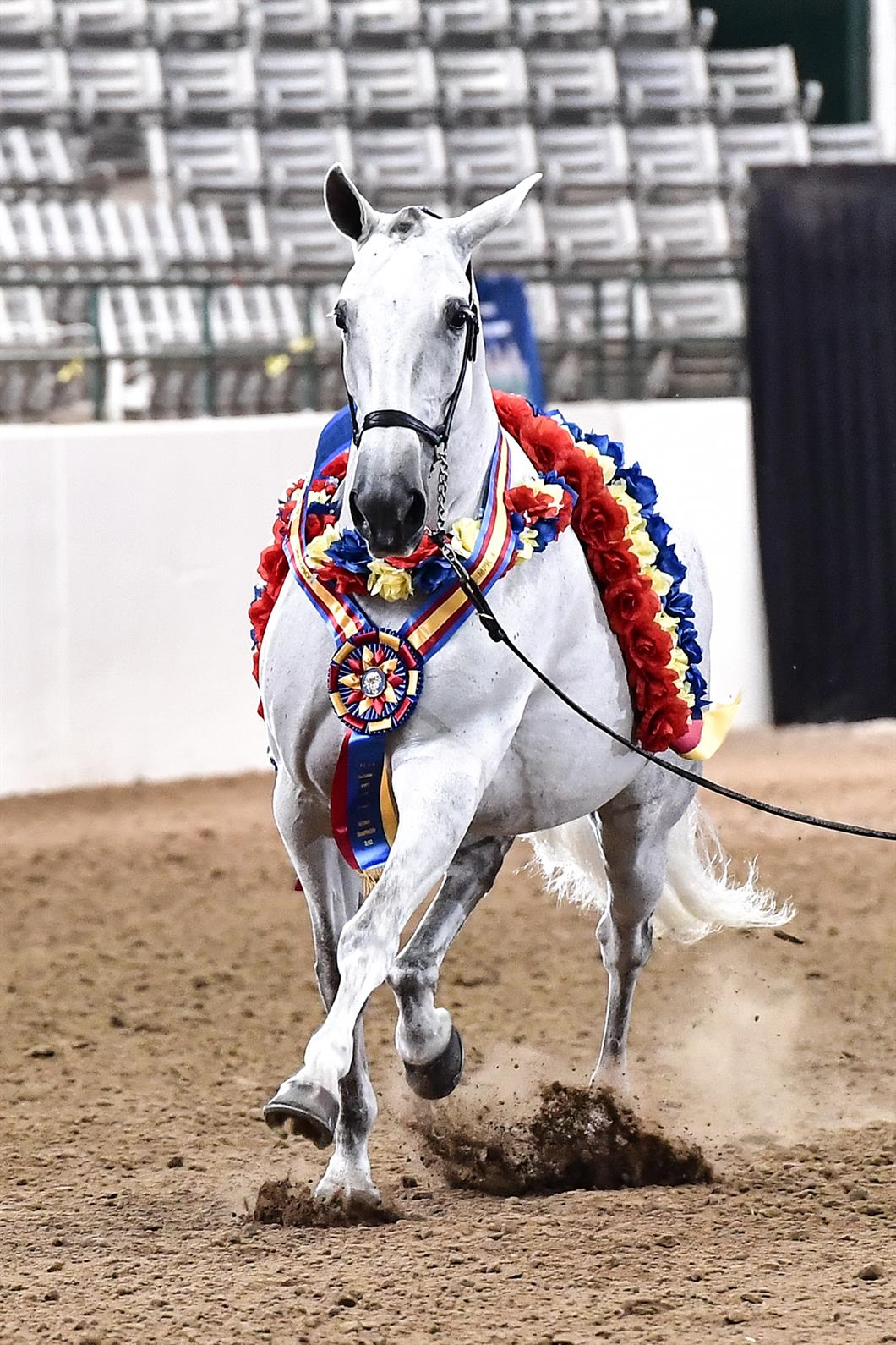 Iberian Horses Shine At 2017 Ialha National Championship