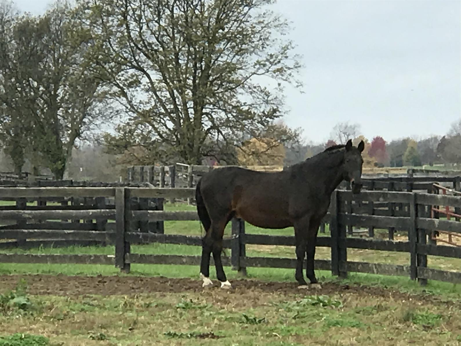 Preparing The Older Horse For Winter Us Equestrian