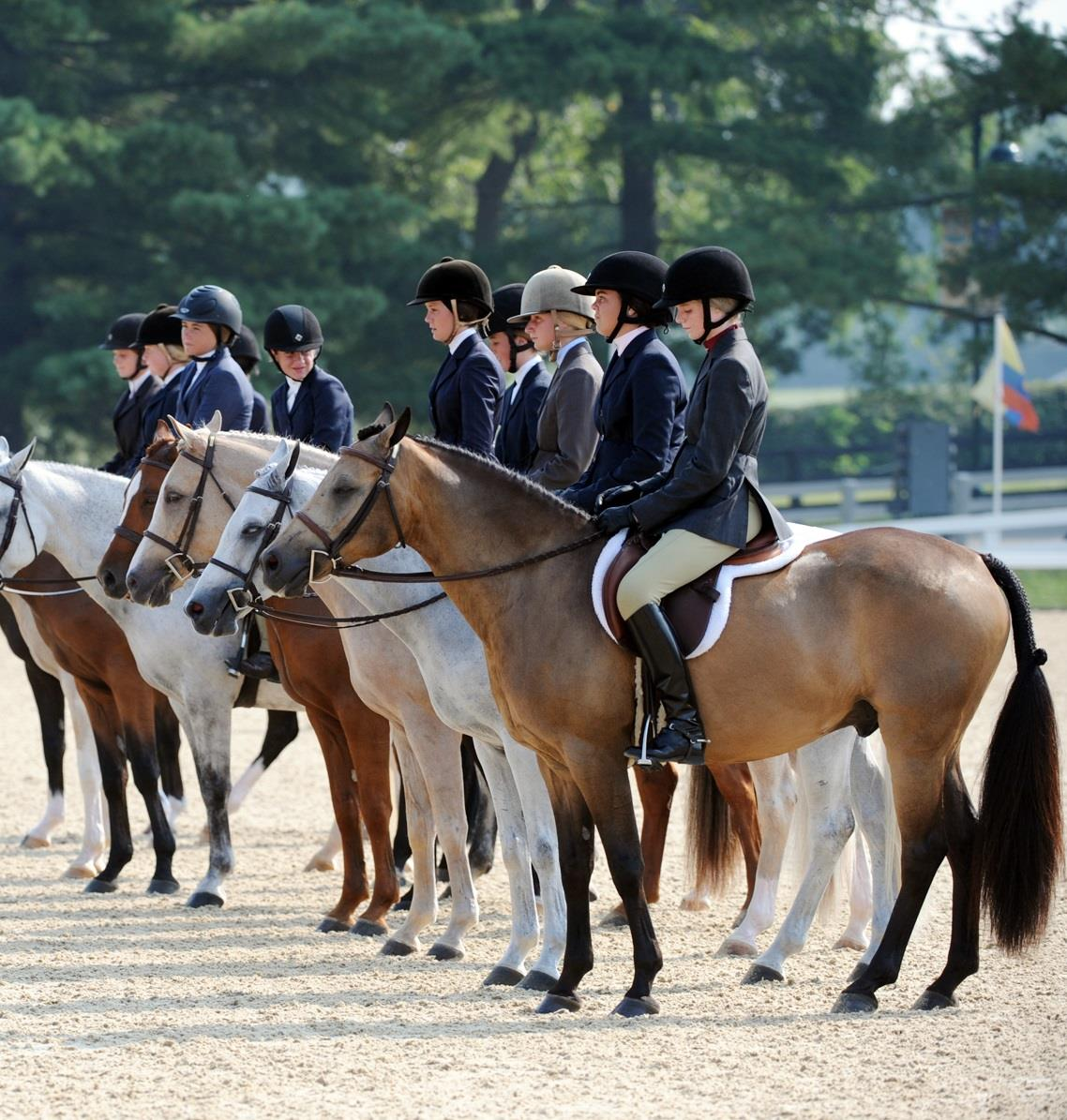 Equine Herpesvirus: What You Need to Know   US Equestrian on