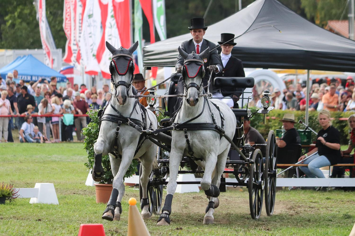 U.S. Driving Team Takes Eighth in FEI Driving World Championships for Pairs