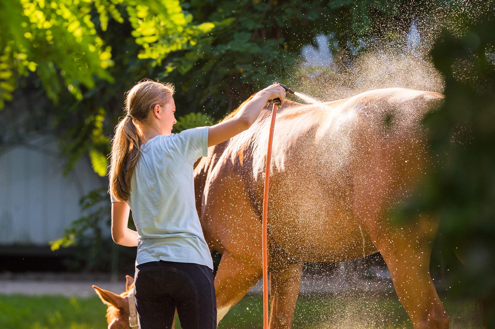 Sultry Summer Weather Can Be Hard On Your Horse Heres -8794