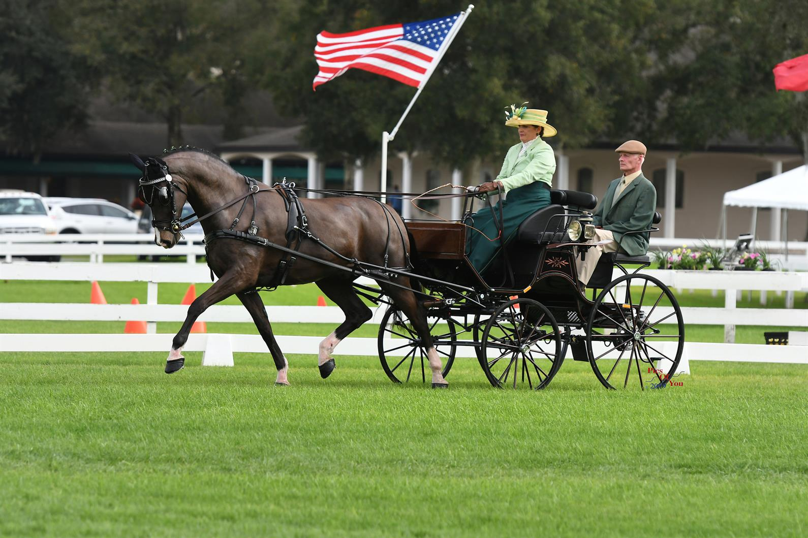 US Equestrian Names Entry for FEI Driving World Championships for Young Horses