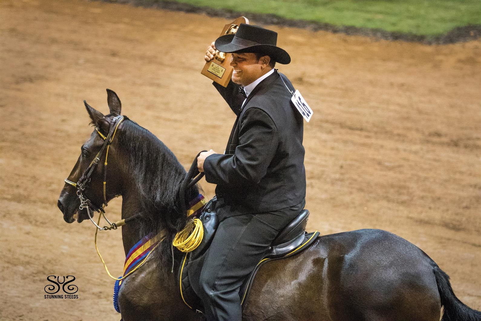 Five Things To Know About Paso Finos Us Equestrian