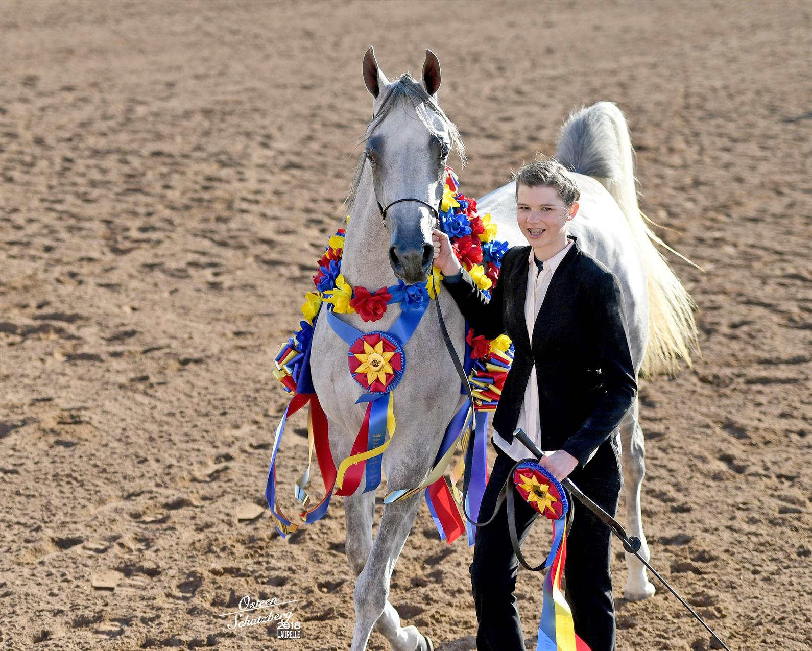 Scottsdale Arabian Horse Show Set To Showcase History And Diversity Of Arabian And Half Arabian Horses Us Equestrian