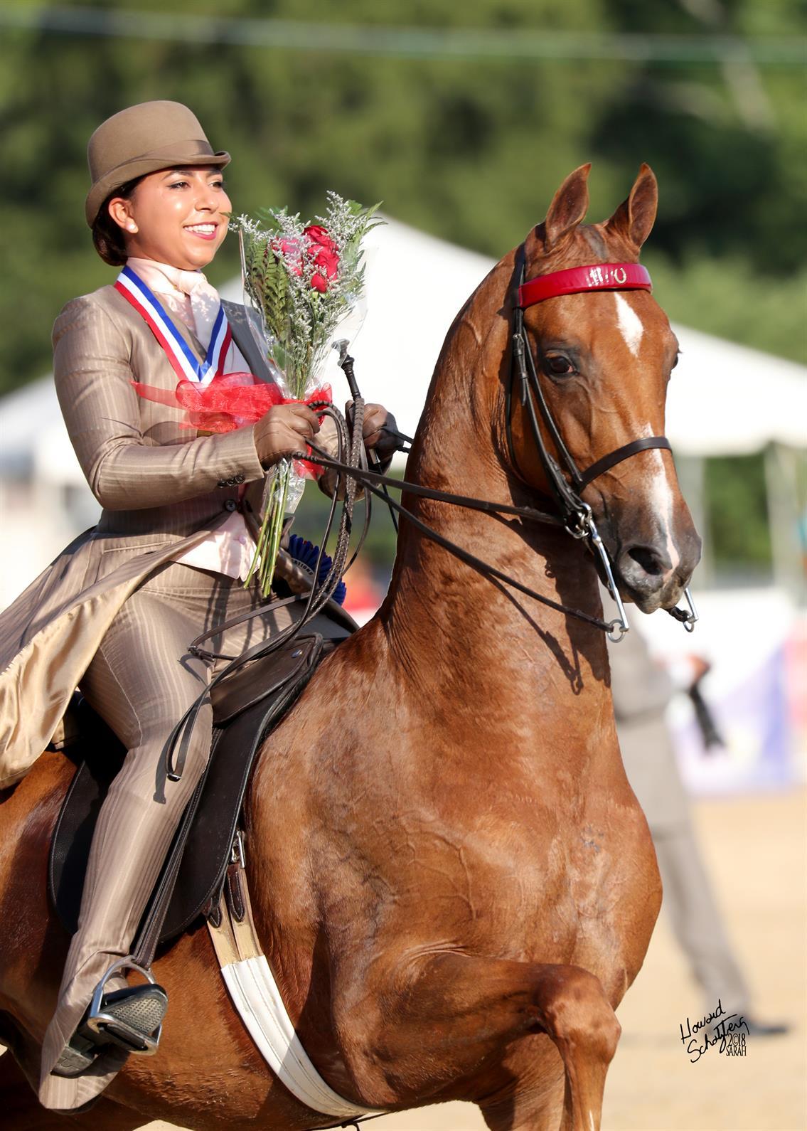 Walz Unanimously Crowned 2018 Usef Saddle Seat Adult Amateur Medal